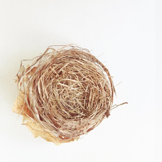 nest 1 blog