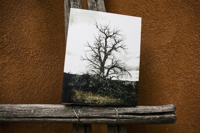 Galisteo Dead Tree Wood Block front web
