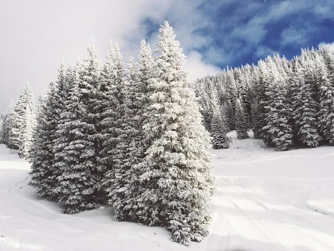ski basin trees snow1 copy